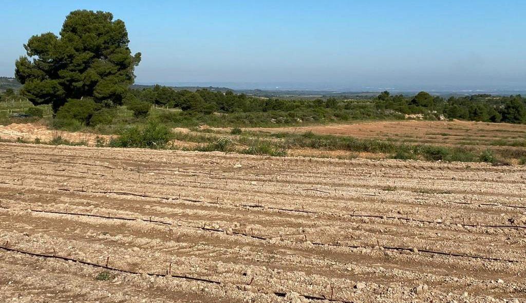 Plantació Malbec a la finca Albages